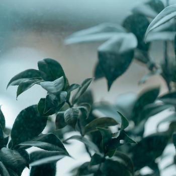 ユカリサ『この街』12/14デジタルリリース